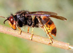 Eşek Arılarının Bu Yeteneğini Biliyor musunuz?